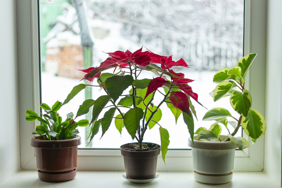 Indoor Flowers in Winter